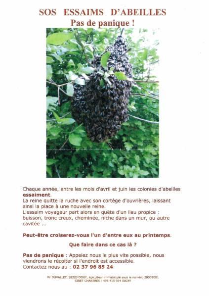 Essaims d'abeille